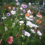 Productrice de fleurs Guidel